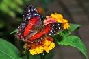 Casa delle farfalle foto - capodanno milano marittima